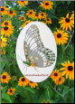 "Butterfly Static Cling Window Decal 4"" x 6"""