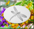 "Dragonfly Static Cling Window Decal 4"" x 6"""
